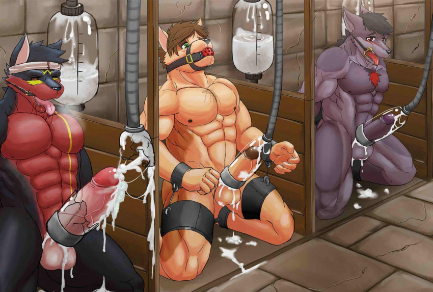 Forced multiple cock milking