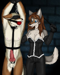 annoying_watermark anthro arms_above_head ball_gag blindfold blue_eyes bondage bondage bound brown_hair canine chains clothing collar corset coyote cuffs domination duo erection female female_domination gag gloves hair harness male mammal nipples penis riding_crop scarlett_the_red watermark wolf