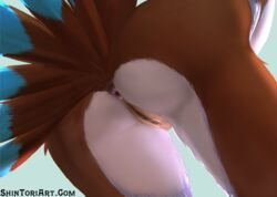 anthro anus ass avian bird close-up feathers female nude presenting presenting_hindquarters presenting_pussy pussy shintori solo victoria