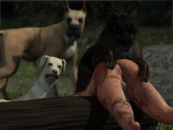3d canine canine canis3 cgi cum female feral forced german_shepherd great_dane group human human_on_feral interspecies labrador mammal pussy rape rosina zoophilia