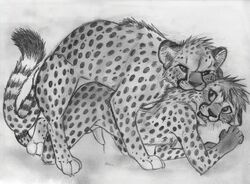 2015 all_fours animal_genitalia anthro anthro_on_feral bite cheetah cum feline feline_penis feral from_behind interspecies male male/male mammal nude penis sex sketch spera zoophilia