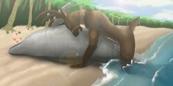 anthro anthro_on_feral beach cervine cetacean closed_eyes cum cum_in_pussy cum_inside deer dolphin duo erection female feral heart interspecies koba lying male male_on_feral mammal marine nude on_side outside penetration penis pussy sea seaside sex straight vaginal_penetration water zoophilia